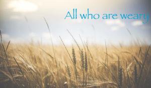 wheatfield-glenn-carstens-peters-all-weary