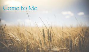 wheatfield-glenn-carstens-peters-copy
